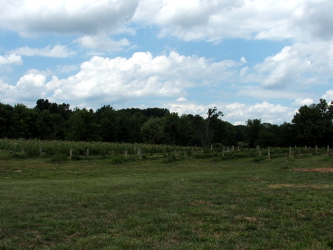 Raspberry Field's at Bird's Haven Farms